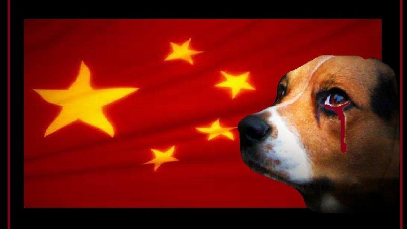 psy w chinach